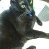 黒猫と一日過ごすの画像