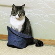 帽子に入った猫