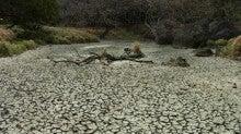 小笠原エコツアー 小笠原エコツーリズム  小笠原旅行 小笠原観光 小笠原の情報と自然を紹介します-大池