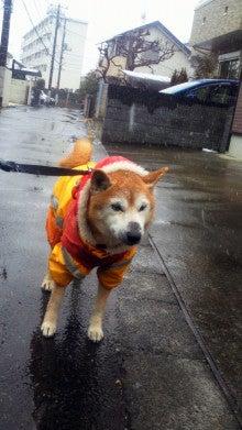 ALIGNLEFT …Tシャツ屋さん始めます…-犬は家族です