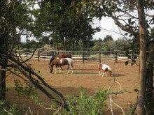 馬を愛する男のブログ Ebosikogen Horse Park-春うらら