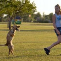 2本足で歩く犬