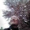 宇都宮の桜の画像