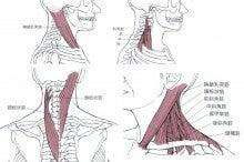 ストレッチ 頚椎 症