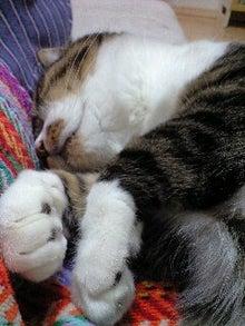ずれずれブログ…湘南で猫と暮らせば…-110423_1707~0001.jpg