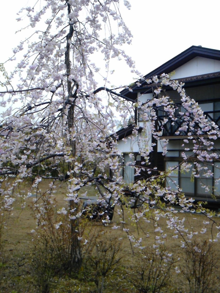浄土真宗親鸞会         広島のつどい-110423_111306.jpg
