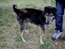 東北動物レスキュー 長崎の保健所の命を救う会の代表のブログ