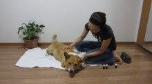 犬のマッサージ屋さん☆ドッグアロマとマッサージで犬も人間もハッピーな毎日!