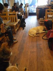 ドッグカフェ&バーRuncafeと愛犬達との日常-社会化トレーニング犬慣れ会
