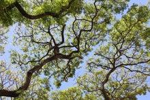 $松尾祐孝の音楽塾&作曲塾~音楽家・作曲家を夢見る貴方へ~-南国の樹木越しの空
