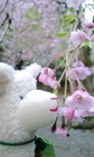 $てぬぐい作家 tenugui chaco のブログ-4/25 花 7