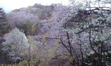 $てぬぐい作家 tenugui chaco のブログ-4/25 花 3