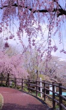 $てぬぐい作家 tenugui chaco のブログ-4/25 花 1