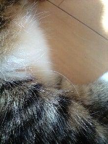 ずれずれブログ…湘南で猫と暮らせば…-110427_0742~0001.jpg