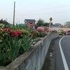春ですね(^O^)/の画像