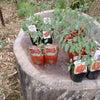 エスワイファーム通信(夏野菜苗植え付け)の画像