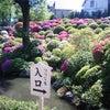 根津神社の画像