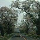 茅ヶ崎から南三陸町へ桜の木を・・・プロジェクトの記事より