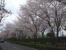 ウチはウチ!!! Re:born-2011桜3