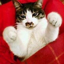 猫踏んじゃった