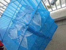 マサの釣りライフ-2011-0430-165854347.JPG