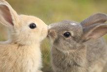 $JC2ギタリスト暴走天使まなのデンジャラスブログ!!!!  I★LOVE★GUITAR!!-rabbit