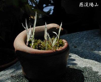 燕渓陽山 -深夜特急便--20110501_1.jpg