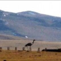 モンゴルに春を告げる…