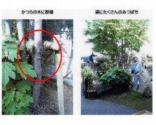 chu98xpのブログ-分封日本蜜蜂
