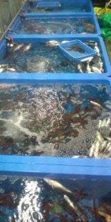 深水ブログ -F1000038.jpg