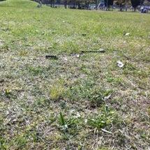 今日は、芝生の上で