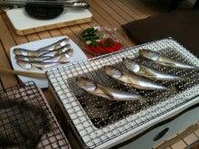 元 midi 事務長日記-Harta-hata fish