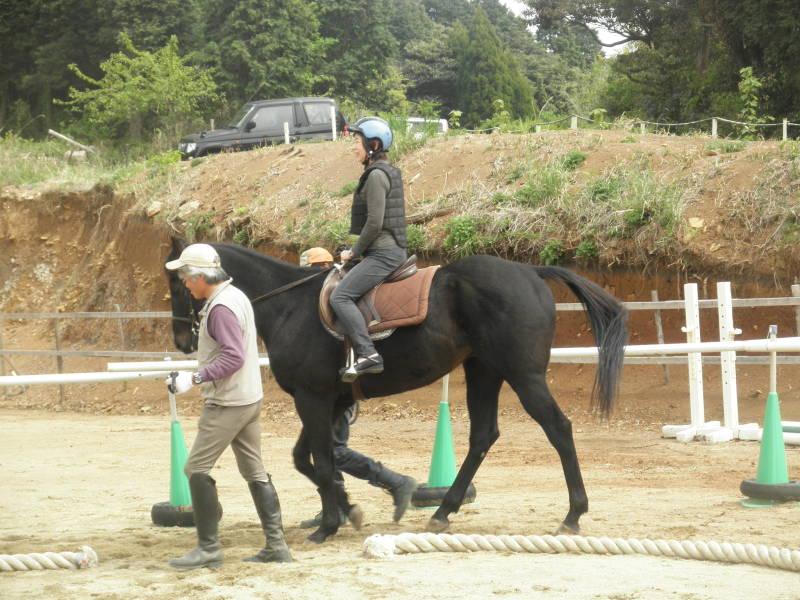 馬を愛する男のブログ Ebosikogen Horse Park-少し年齢高くても
