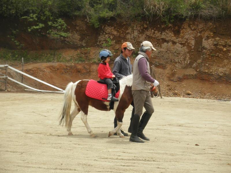 馬を愛する男のブログ Ebosikogen Horse Park-今日1番の小さなお客様