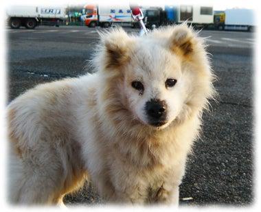 被災動物レスキュー&サポートのブログ
