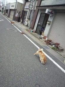 DJ 村内オフィシャルブログ「TAKASHIのBooBooLife」Powered by Ameba-P1000018.jpg