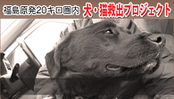 ☆・゚.:*:Marino御殿:*:.゚・☆-福島原発20キロ県内・犬猫救済プロジェクト