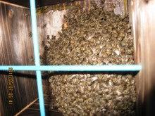 chu98xpのブログ-日本蜜蜂巣箱2