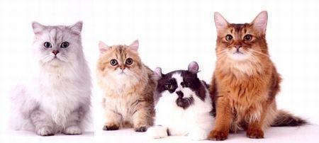 $モデル猫。゚+. 4Cats ゚+.゚