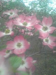 ㈲山下植物園のブログ-110501_1706~02.JPG