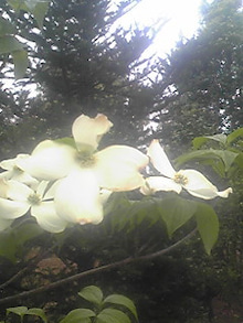 ㈲山下植物園のブログ-110501_1703~01.JPG