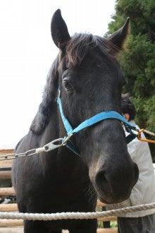 馬を愛する男のブログ Ebosikogen Horse Park-アーサー
