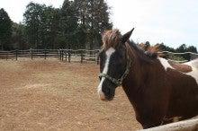 馬を愛する男のブログ Ebosikogen Horse Park-キクマサ