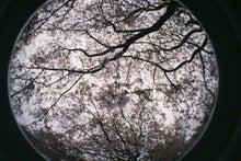 もうやあこブログ anex-枝垂桜