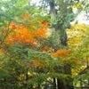 紅葉に、恵まれていますが。?の画像