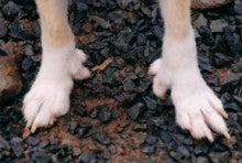 黒狗の犬小舎-あし
