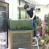 水草セールの画像