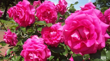 AHN MIKA オフィシャルブログ『Jewel of Lotus』Powered by Ameba-110514_135639_ed.jpg