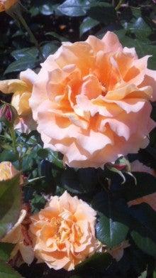 AHN MIKA オフィシャルブログ『Jewel of Lotus』Powered by Ameba-110514_143134.jpg
