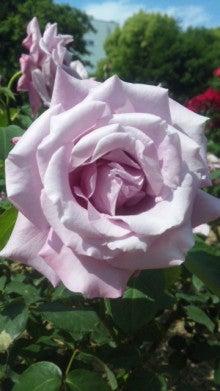 AHN MIKA オフィシャルブログ『Jewel of Lotus』Powered by Ameba-110514_143214.jpg